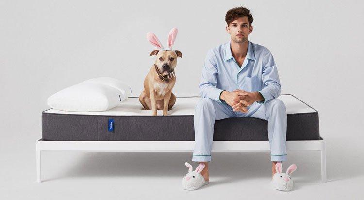 Casper mattress reviews and a dog