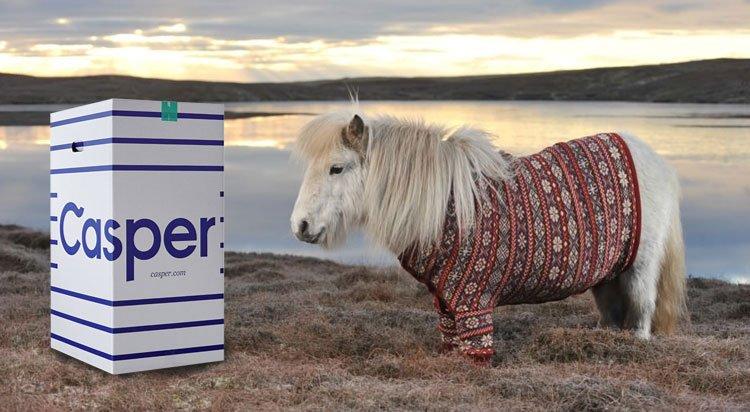 Casper mattress and a Shetland Pony wearing a Cardigan